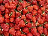 Erdbeeren 20++ Samen *Großfruchtig