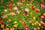 Qulista Samenhaus - Blumenmischung Blumen Last Minute Mix 3m² bienenfreundlich. schnellwüchsig schnellblühend Blumensamen Wildwiese Saatgut winterhart mehrjährig