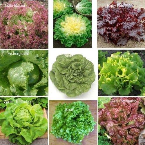 9 Arten – Schönes Salat Set – 2250 Samen