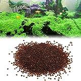 Kofun Wasserpflanzen Samen Aquarium Wasser Zier Aquarium Gras Vordergrund Decor