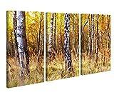 Leinwand 3tlg Birke Birkenwald Wald Baum Herbst Bild Bilder Leinwandbild Leinwandbilder Holz fertig gerahmt 9X1210, 3 tlg BxH:120x80cm (3Stk 40x 80cm)