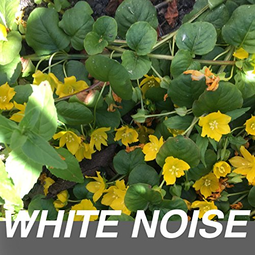 White Noise Appliances