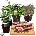 Grillkräuter-Set Rosmarin, Currykraut, Zitronengras & Oregano, frische Kräuter Pflanzen von Weseler Kräuterparadies auf Du und dein Garten