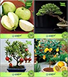 #7: Bonsai Suitable Seeds : Seeds For Indian Climate Combo Thailand Guava, Eucalyptus , Pomagranate Nana, Lemon Garden Seeds Pack By Creativefarmer