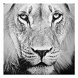 PPS. Imaging Druck auf Glas Wall Art–OLD LION–SQUARE 1: 1Druck auf Glas, Glas Druck, Glas Bild, Wandbild, Glas Bild, Wandbild, Glas Wandbild, Glas-, Wandbild, Dimension HxB: 50cm x 50cm