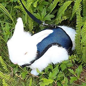 Verstellbares Weiches Kaninchen Geschirr mit Elastischer Leine für Kleines Tier Kitty Haustier Geschirr und Leine für Häschen Katze Little Pet Walking (S(Brust 27,5 -33cm), Blau)