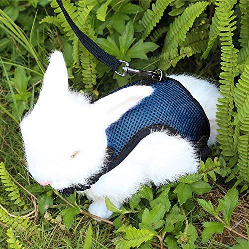 Petcomer Arnés Conejos con Correa Elástica para Animales Pequeños Conejos Hámsteres Gatos (S, Azul)