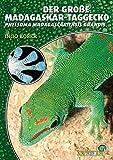 Der Große Madagaskar Taggecko. Phelsuma madagascariensis grandis - Ingo Kober
