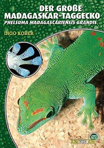 Der Große Madagaskar Taggecko. Phelsuma madagascariensis grandis