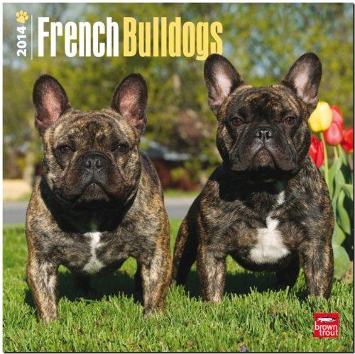 French Bulldogs 2014 - Französische Bulldoggen: Original BrownTrout-Kalender [Mehrsprachig] [Kalender]