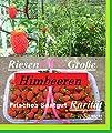 25x Riesen Himbeeren Samen Saatgut Pflanze Rarität essbar Obst Selten essbar Neuheit #131 von Samenhandel Ipsa Import und Handel - Du und dein Garten
