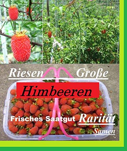 25x-riesen-himbeeren-samen-saatgut-pflanze-raritat-essbar-obst-selten-essbar-neuheit-131