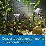 API AMMO-LOCK Freshwater and Saltwater Aquarium Ammonia Detoxifier 473 ml Bottle 11