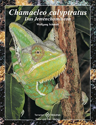 Chamaeleo calyptratus: Das Jemenchamäleon (Terrarien-Bibliothek)