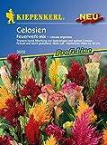 Pflanzenservice 910166 Kiepenkerl Celosia Feuerwerk Mix