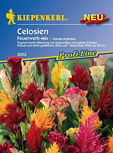 Kiepenkerl, Celosia Feuerwerk Mix