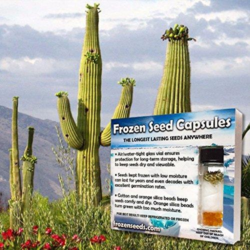 Giant Saguaro Cactus Seeds (Carnegia gigantea) 20+ Rare...