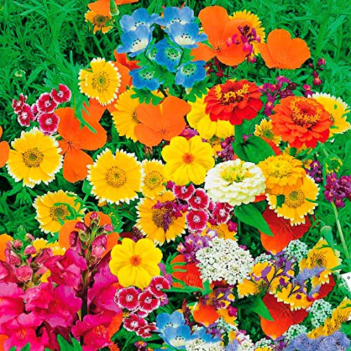 o- 100 Stück Selten Blumenmischung bienenfreundlich Blütenträume blau/weiß/rot/gelb Glockenblume Blumensamen exotisch mehrjährig winterhart für Schmetterlinge, Bienen ()