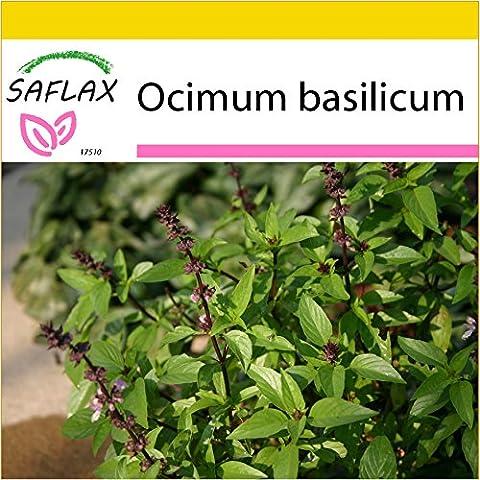 SAFLAX - Anzucht Set - Kräuter - Griechischer Oregano - 600 Samen - Origanum vulgare supsp. Hirtum