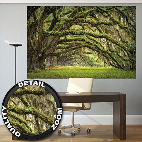 Fotomurale natura quadro decorazione bosco paesaggio estate foresta muschio mistico oak quercia viale quercus bosco delle fiabe parco rami i fotomurales by great art (210x140 cm)