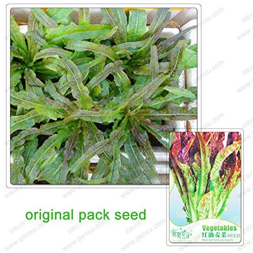 30 graines / Pack, feuilles de laitue graines de légumes, plantes de potager bio en pot feuilles graines de laitue