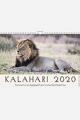 Kalahari - Tierreichtum im Kgalagadi Transfrontier Park, Südafrika (Wandkalender 2020 DIN A4 quer) Kalender
