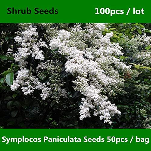 Tan Berry (Shopmeeko ^^ Sapphire Berry Symplocos Paniculata ^^^^ 100pcs, Zierpflanze China Bai Tan ^^^^, laubabwerfender Strauch Asiatischer Sweetleaf ^^^^)