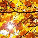 Pixblick - Herbstbaum - Hochwertiges Wandbild - Acrylglas 120 x 120 cm