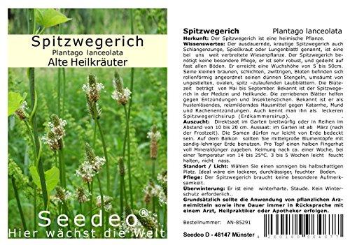 Seedeo® Spitzwegerich (Plantago lanceolata) 500 Samen