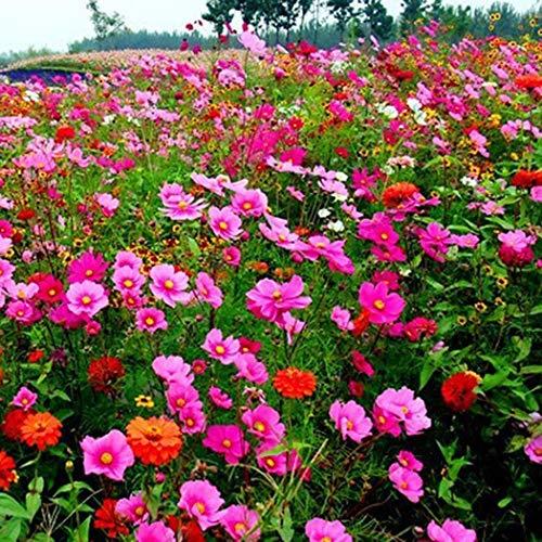 Jennem Samenhaus - Mixed Wildblumen Kombination Samen Jährliche Mehrjährige Blume Pflanzensamen Garten Blumensamen -