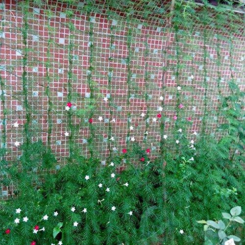 Quanjucheer Ranknetz für Pflanzen, Kletternetz, Garten, Nylon-Netz, Rankgitter, Gemüse, Bohnen