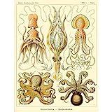 Wee Blue Coo LTD Nature Ernst Haeckel Octopus Biology