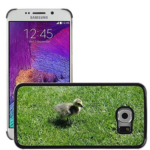 Nur Handy HOT Style Handy PC Hard Case Cover//m00139083Gosling Ente Küken Vogel Baby Young//Samsung Galaxy S6Edge (passt Nicht für S6)
