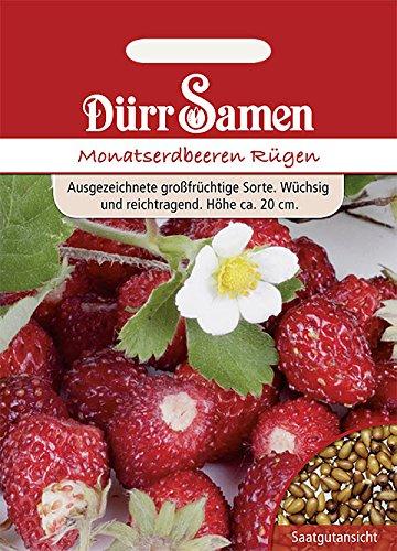 Erdbeeren Monats Erdbeeren Samen (Samen Erdbeere)