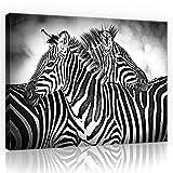 FORWALL Leinwandbild Kunstdruck Wandbild Zebras O1 (100cm. x 75cm.) AMFPP10092O1 Gratis Wandaufkleber Canvas Picture Print Natur Wild Tier Tiere Afrika Schwarz Weiss Zebra