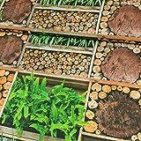 Dekostoff Pflanzen & Holz Digitaldruck Canvasstoff - Preis