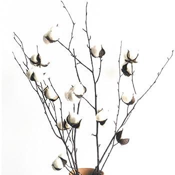 Lot De 30 Veritables Fleurs De Coton Sechees Avec Tige 30 Cm