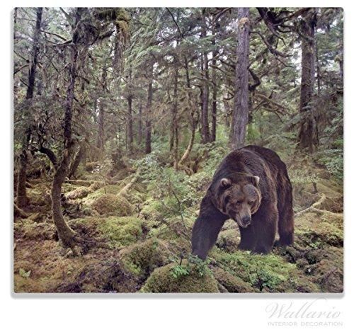 Wallario Herdabdeckplatte/Spitzschutz aus Glas, 1-teilig, 60x52cm, für Ceran- und Induktionsherde, Gefährlicher Grizzlybär im Wald