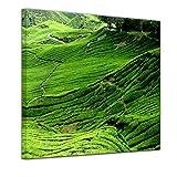 Bilderdepot24 Kunstdruck - Teeplantage in Malaysia - Bild auf Leinwand - 80 x 80 cm - Leinwandbilder - Bilder als Leinwanddruck - Wandbild Städte & Kulturen - Landschaften - Asien - Teefelder