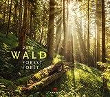 Wald 2019, Wandkalender im Querformat (54x48 cm) - Landschaftskalender / Naturkalender mit Monatskalendarium
