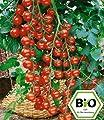 BALDUR-Garten BIO-Cherrytomate 'Pepe' F1,2 Pflanzen BIO-Tomatenpflanze von Baldur-Garten - Du und dein Garten