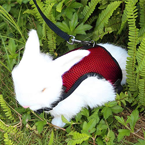 Petcomer Confortevole Imbracatura per Coniglio con Elastico Guinzaglio Morbido Pettorina Traspirante per Piccoli Animali Criceti Gatti(S Rosso)