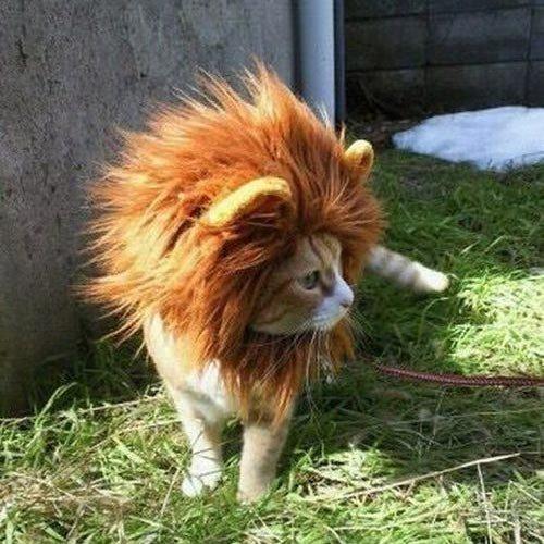 Löwenmähnen Perücke für Katzen, niedliches, bequemes Kostüm mit leicht zu verwendendem Klettverschluss (Niedlich, Einfache, Schnelle Halloween-kostüme)