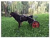 Chien Fauteuil Roulant, Voiture pour Chien, adapté aux Animaux domestiques Entraînement de rééducation des Jambes Membre Handicapés Handicapés Handicapés Assistance à la Marche , pour Les Grands chie