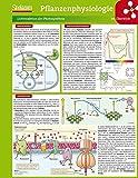 Lerntafel: Pflanzenphysiologie im Überblick (Lerntafeln Biologie) - Lerntafeln Biologie