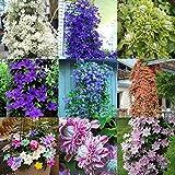 8: 40pcs home garden balcony piante ornamentali bellezza clematis flower seeds wt88 03