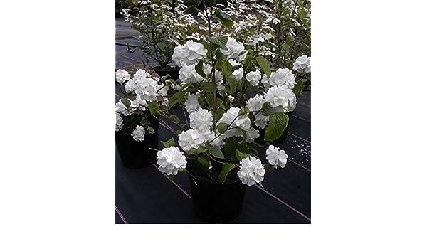Messerhalter Messerflansch für Castel Garden 22465608//0 122465608//2 484-TR 534