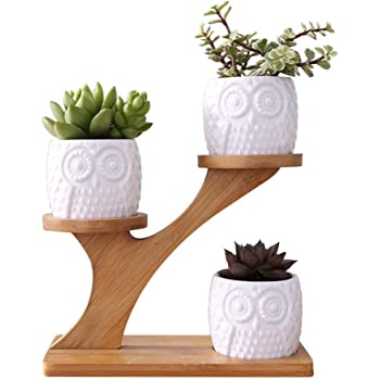 Besteffie 3pcs Owl Succulent Pots Ceramic Round Succulent Plant Pots with 3 Tier Treetop Shaped Bamboo Flower Pot Stands Holder