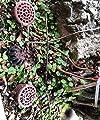 JAUTO Bonsai Düngerkorb mit Erdspieß Deckel für Garten Pflaze Zubehör von JAUTO auf Du und dein Garten