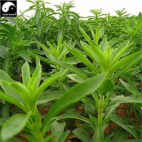 Chinese Green Stevia Samen Bio-Kräuter-Bonsain Samen Garten Zuckerfabriken Sementes null Kalorien natürlicher Süßstoff Tian Ye Ju